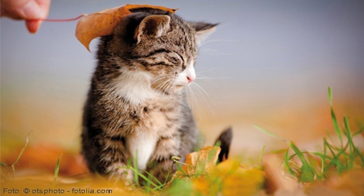 Liebeserklärung an die Katze