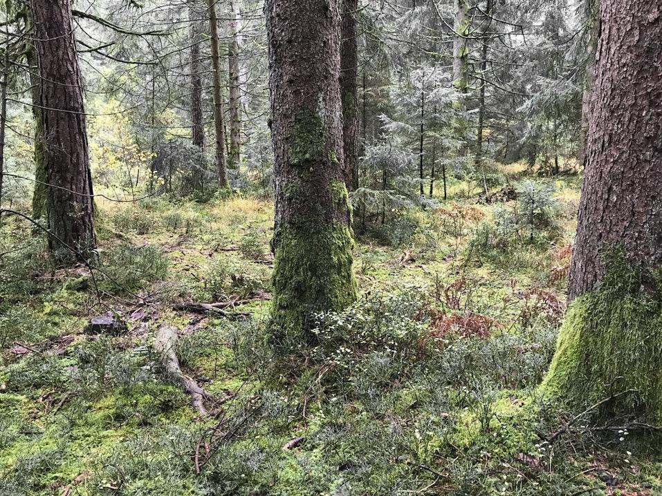 Wald-im-Spätherbst