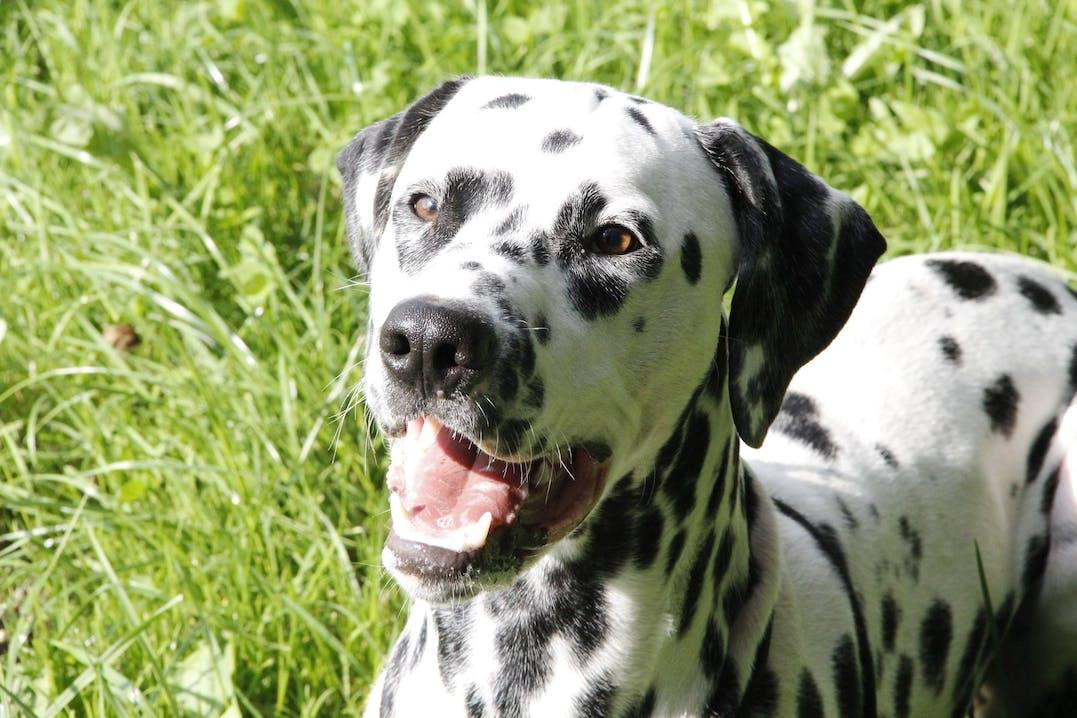 Erziehung und Leben mit einem tauben Hund