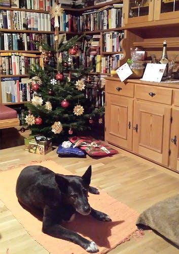 Hund vorm Weihnachtsbaum