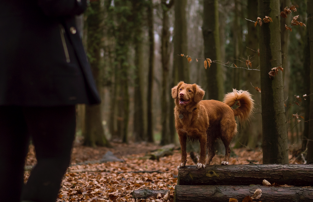 Laufen, Hund, SportScheck