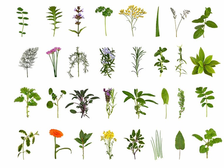 Herb and Flower Collection