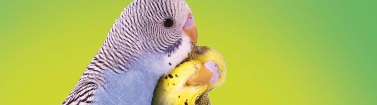 Tierische Tipps für Ziervögel