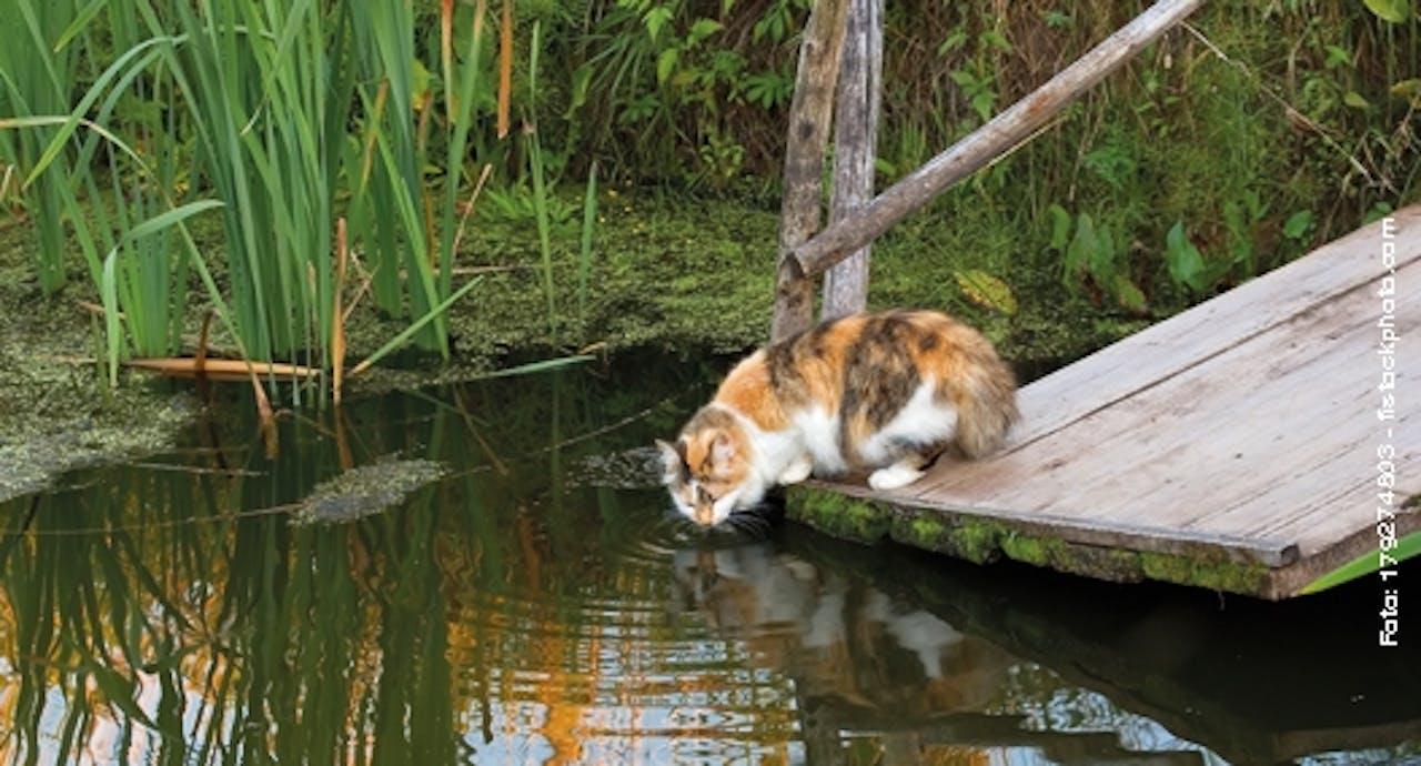 Fische fangende Katze