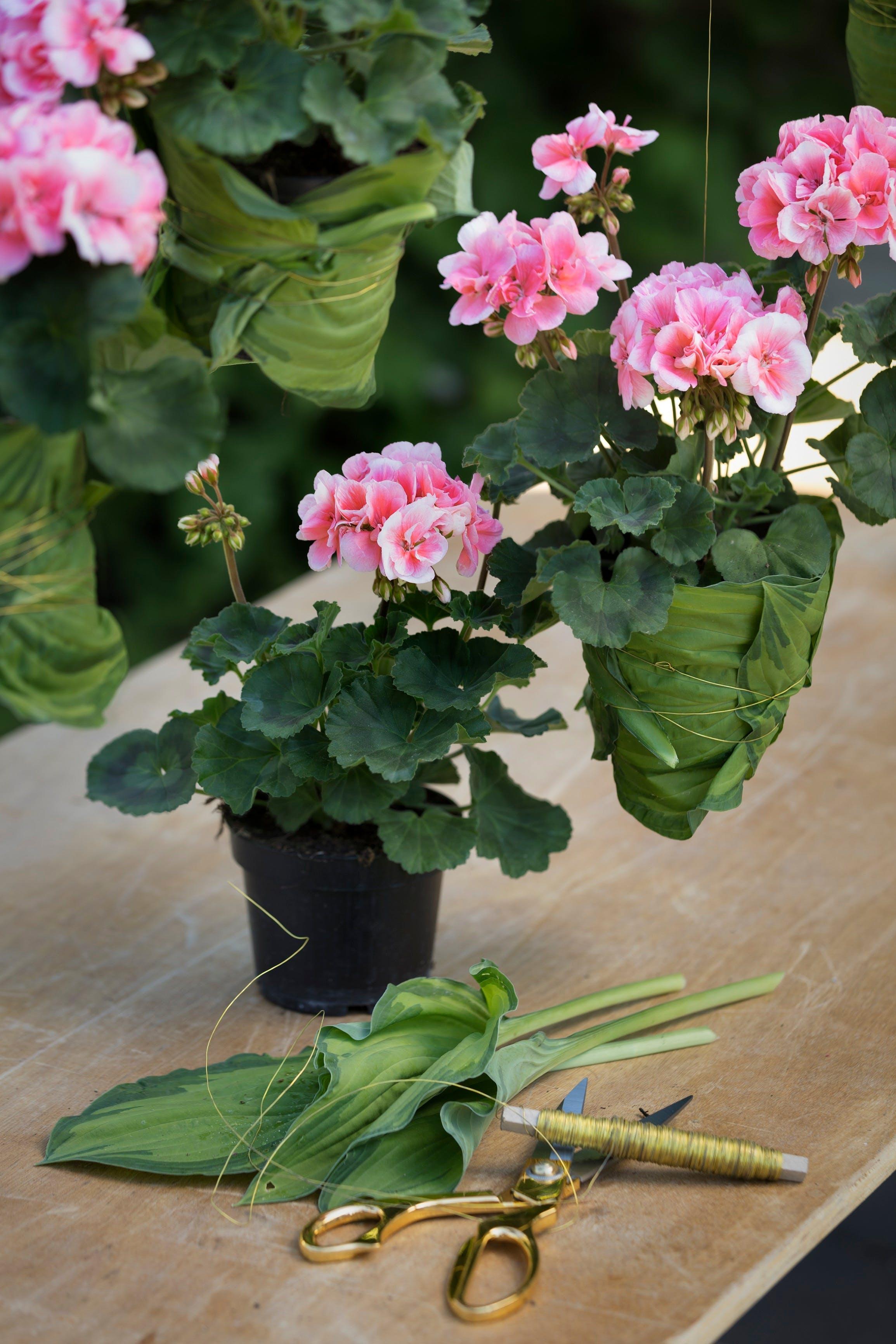 Geranium flower pot screen