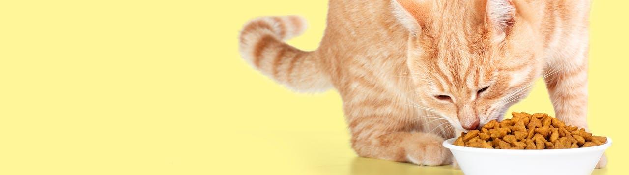 Tierische Tipps Katzenernährung