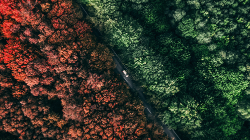 Straße im Wald in Vogelperspektive mit farblich unterschiedlichen Teilen des Walds