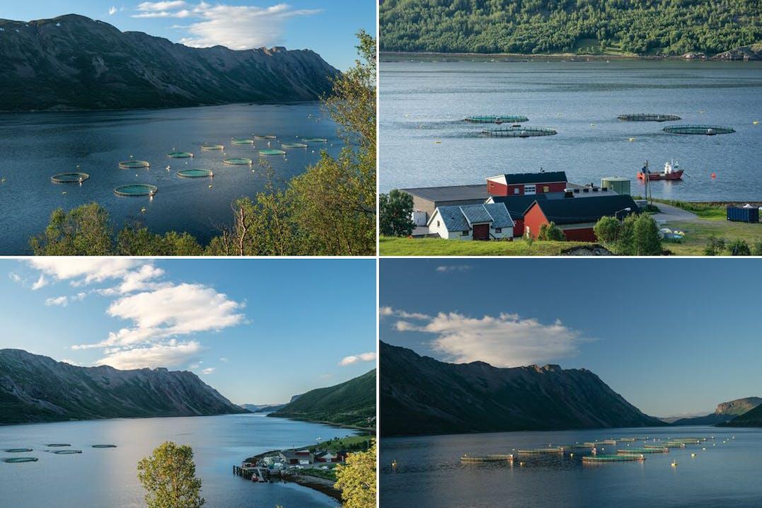 Durch Lachsfarmen kommen unberührte Gewässer mit Parasiten, Medikamenten und Fäkalien in Kontakt. Alta, Norwegen. BEN MOON