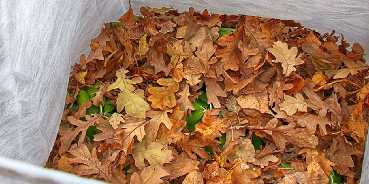 What Is Leaf Mulch And How To Make It Flymo