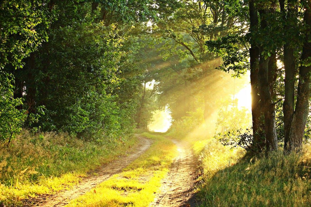 Wanderweg, der durch den Wald führt. Helle Sonnenstrahlen fallen zwischen den Bäumen durch und beleuchten den Weg.
