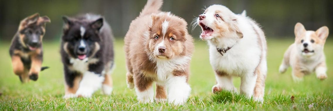 Gesunde glückliche Hundewelpen