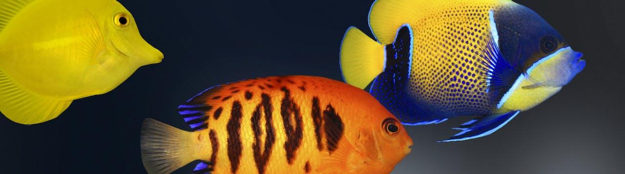 Tierische Tipps zur Meerwasseraquaristik