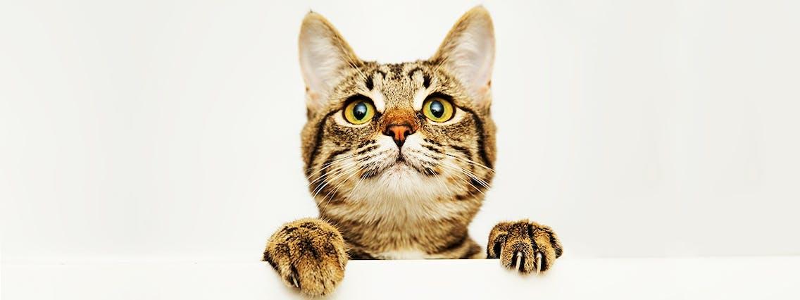 Beliebte und ausgefallene Katzennamen