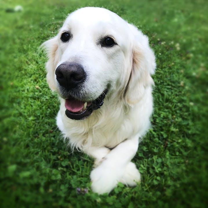 pets Premium Bürohund Charlie