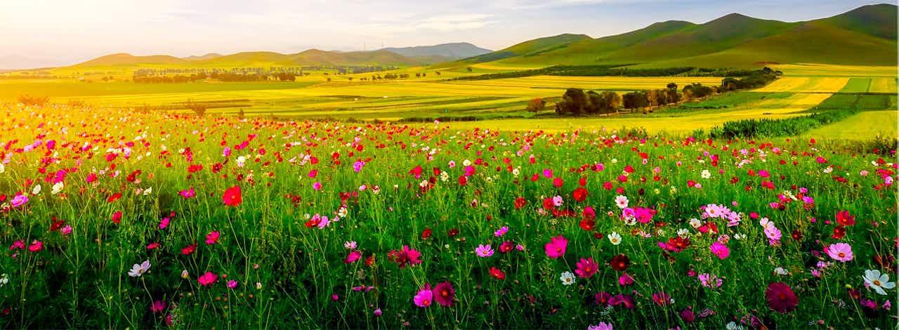 champs-de-fleurs