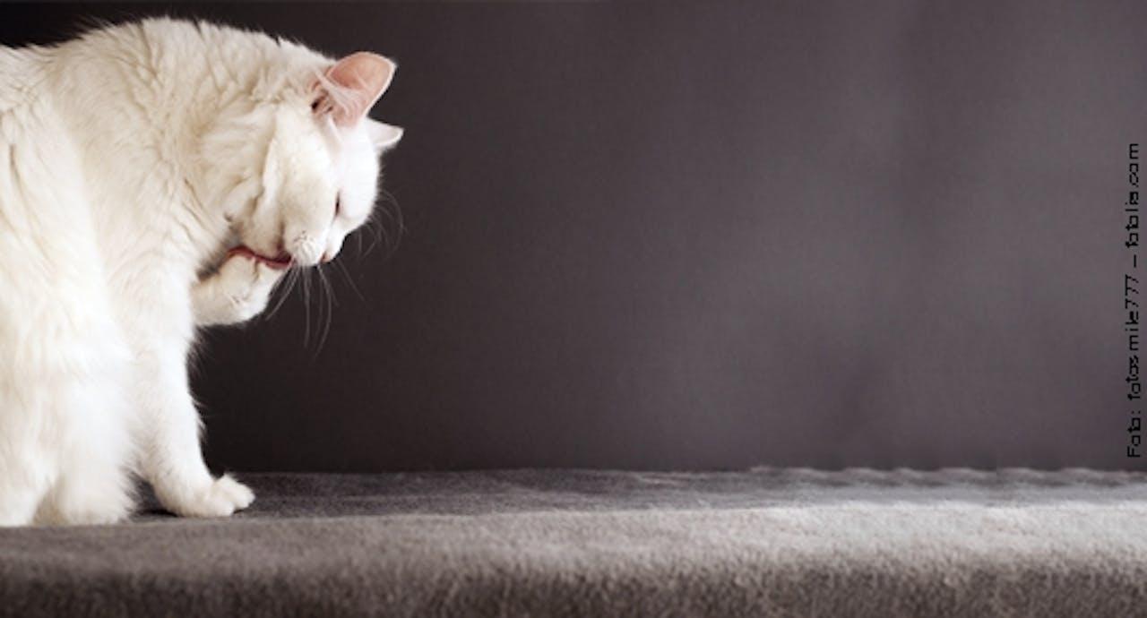 Katze am Putzen