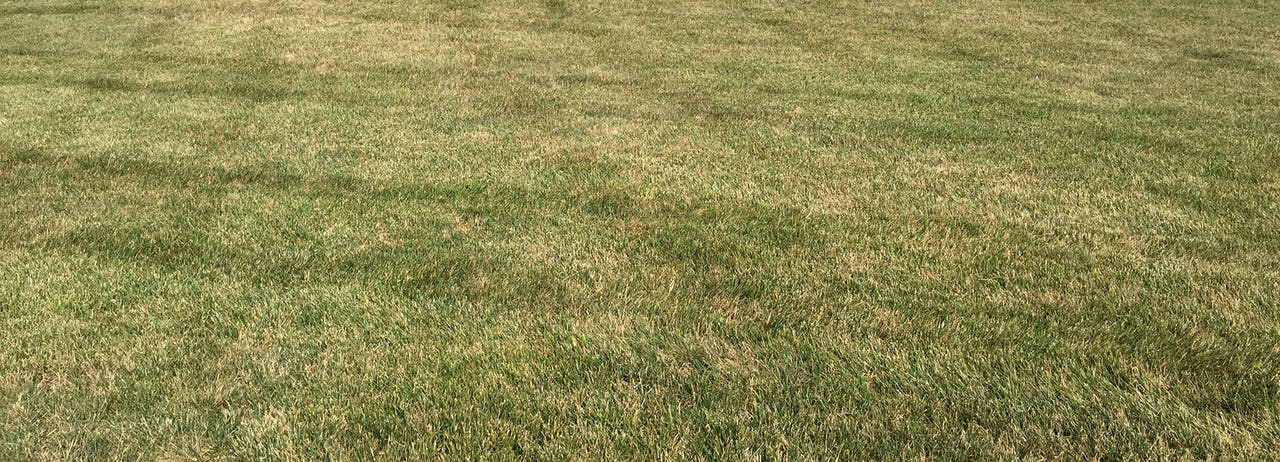 How To Get Rid Of Yellow Patches On Lawn