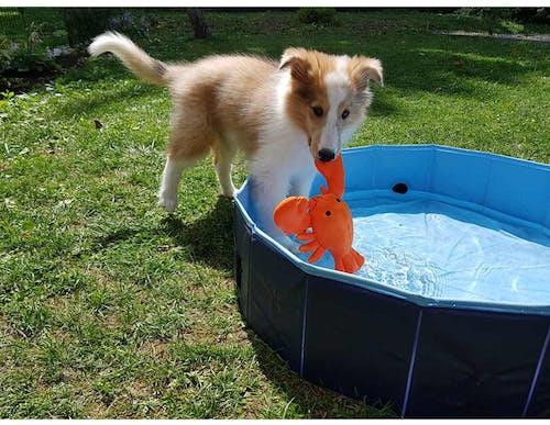 Finnick als Welpe mit dem Hunter Aqua Toy Hummer