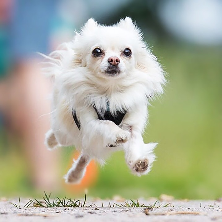 pets Premium Bürohund Alicia