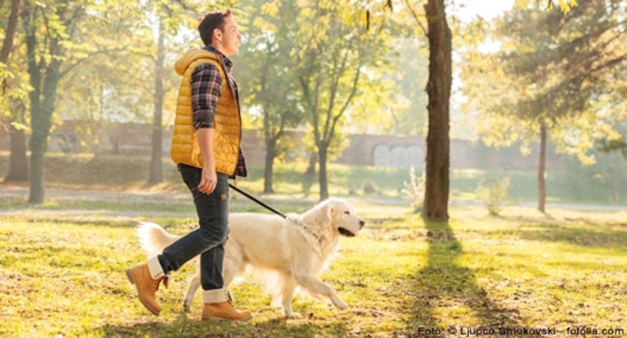 Leinentraining für Hunde