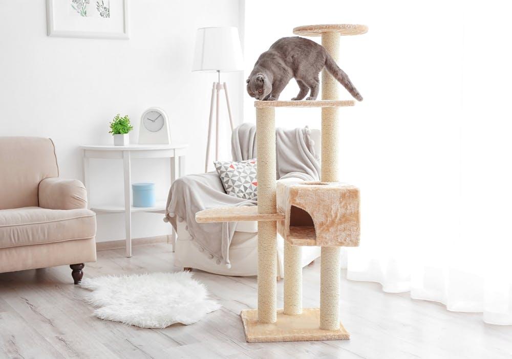 Kissojen Madot