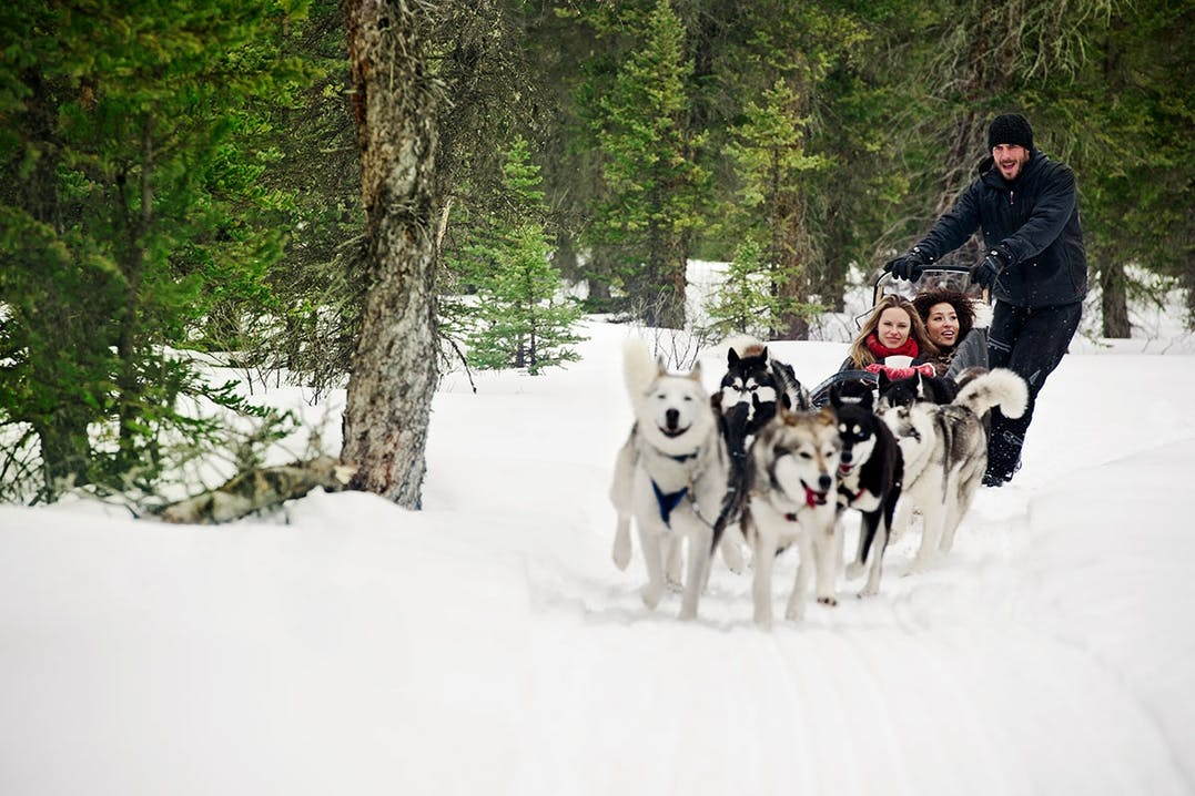 Husky Sledding in Kanada