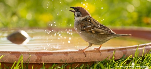 Badestelle für Vögel