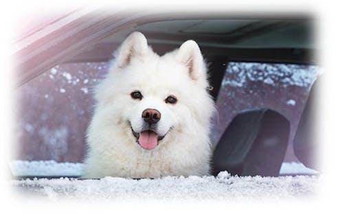 Hund im Winter im Auto lassen?