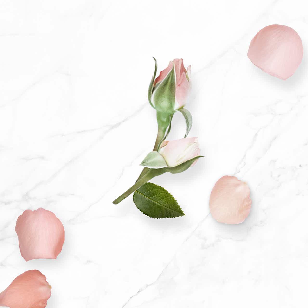 N.A.E. Inhaltsstoffe Bio-Damaszener Rose