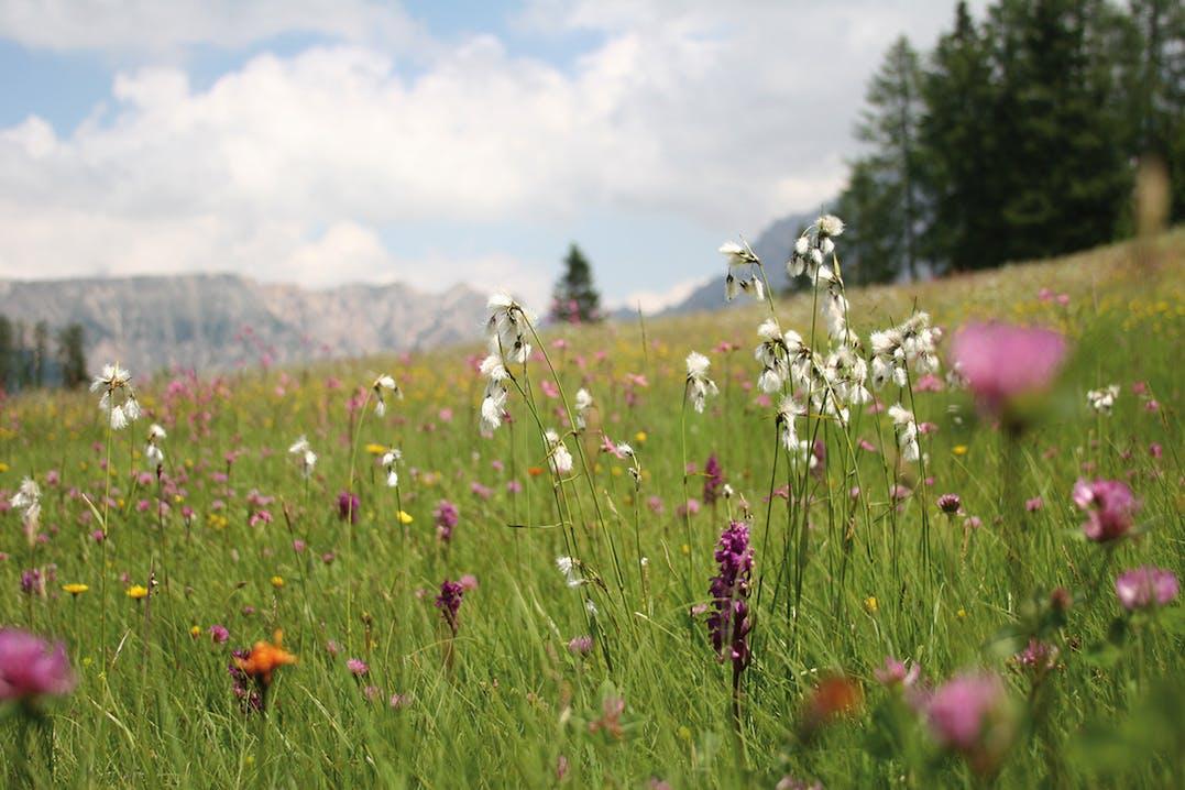 Vitalis Dr. Joseph's bio zertifizierte Naturprodukte von Alpicare mit Alpenkräutern aus Südtirol