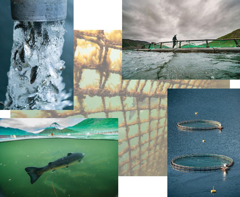 Die globale Fischindustrie nutzt Netzgehege in küstennahen Gewässern. BEN MOON
