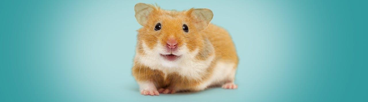 Hamster Ratgeber Tierische Tipps Von Das Futterhaus