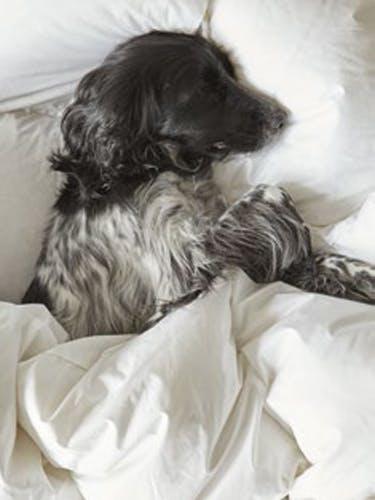Die perfekte Bettdecke für jeden Typ!