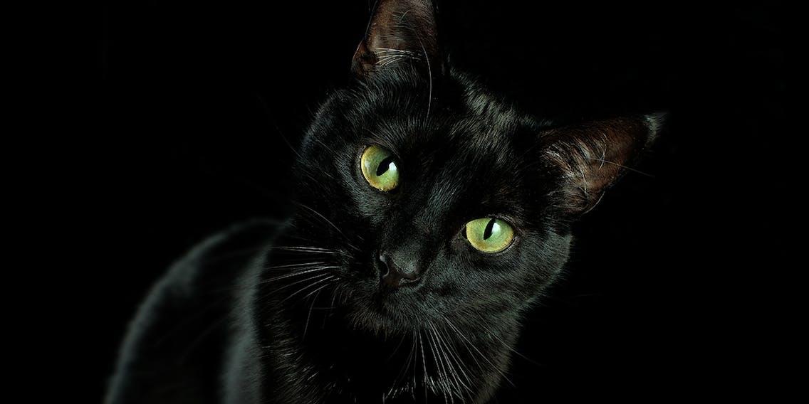 Schwarze Katze im Aberglauben