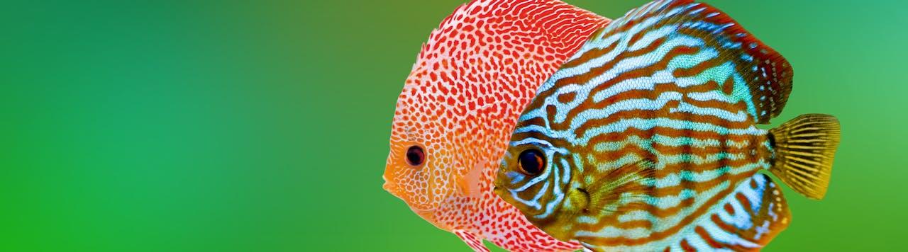 Tierische Tipps zur Süßwasseraquaristik