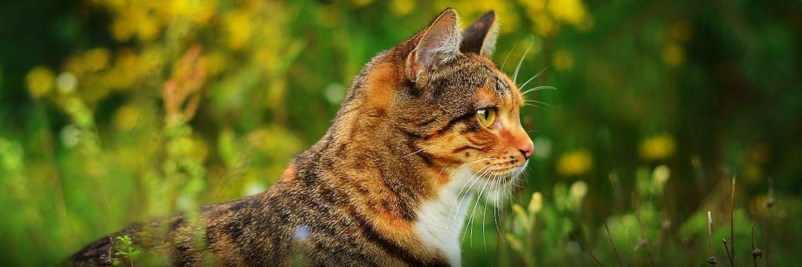 Katze Wissenswertes