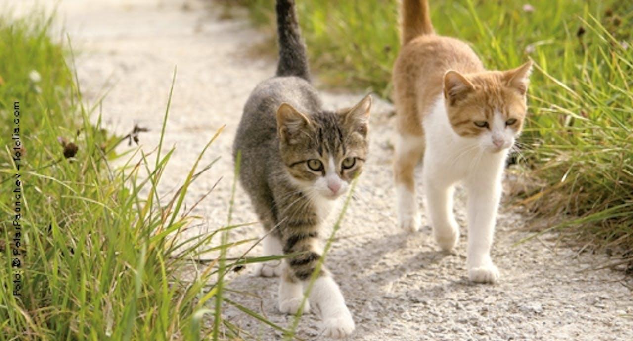 Verschiedene Typen von Katzen
