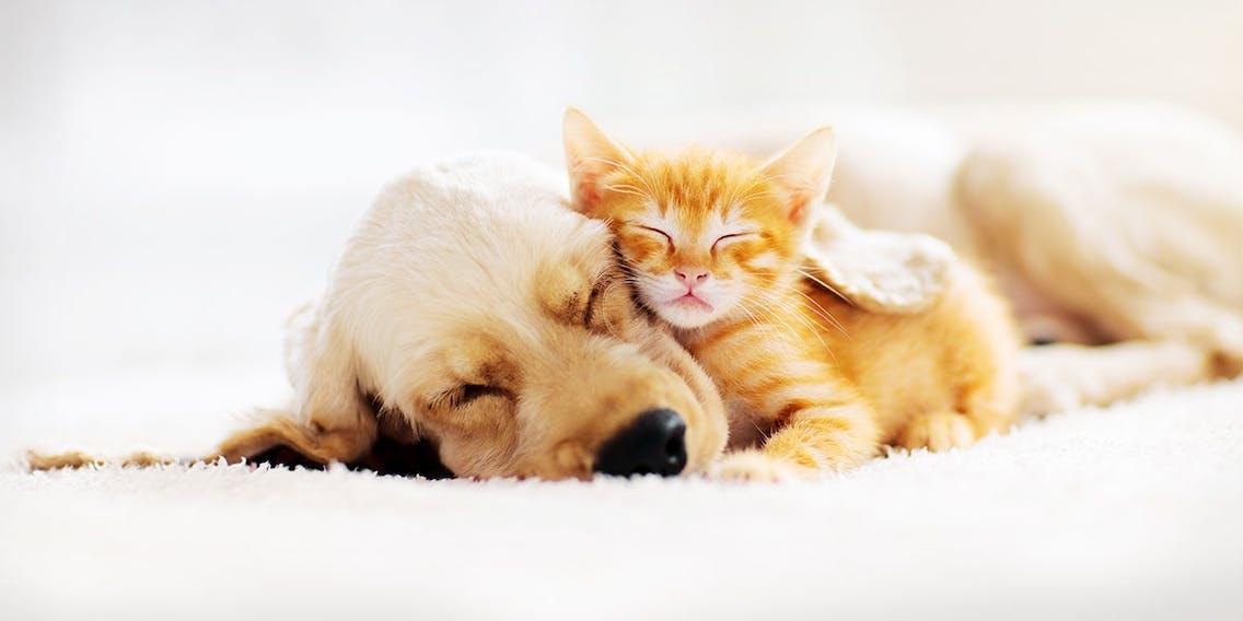 Welpenschlaf bei Hunden und Katzen