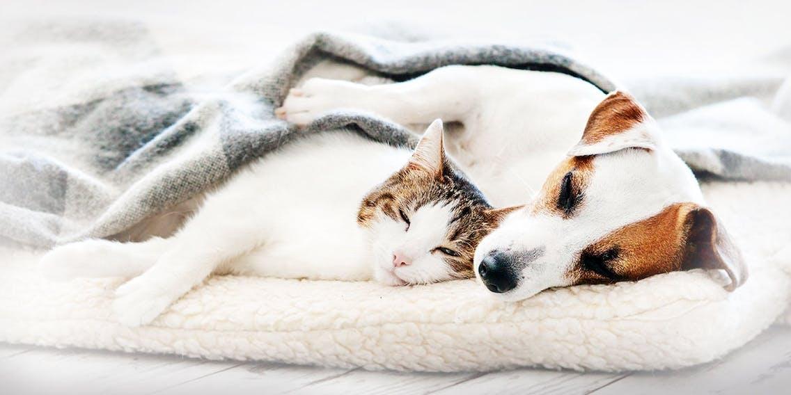 Schlaf von Hunden und Katzen