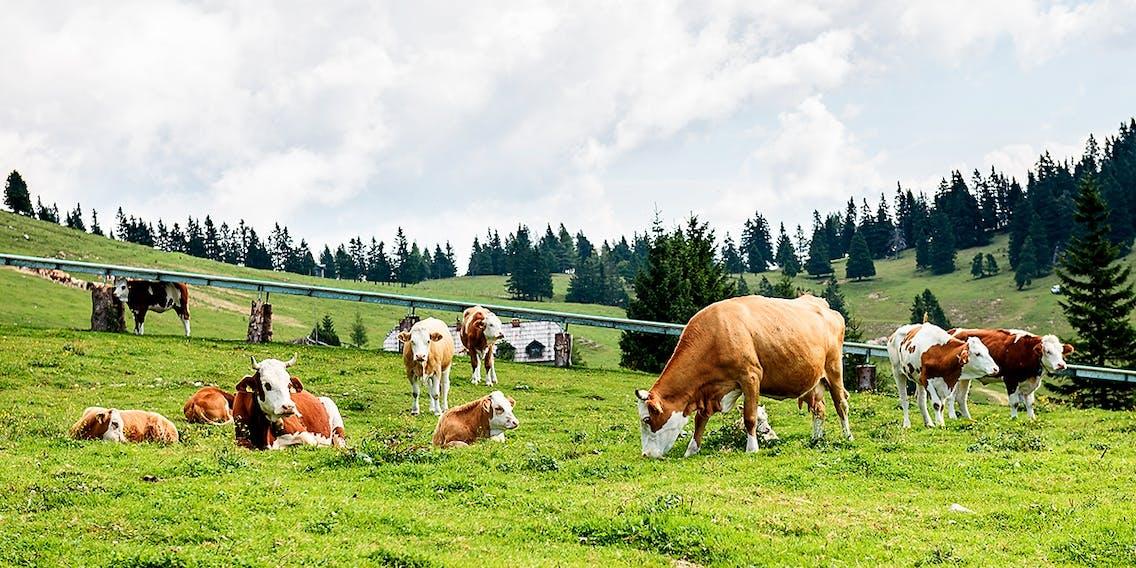 Artgerechtere Nutztierhaltung in Schweden
