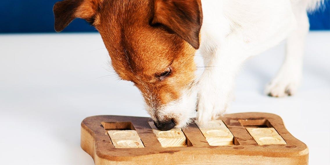 Intelligenzspiele für Hunde