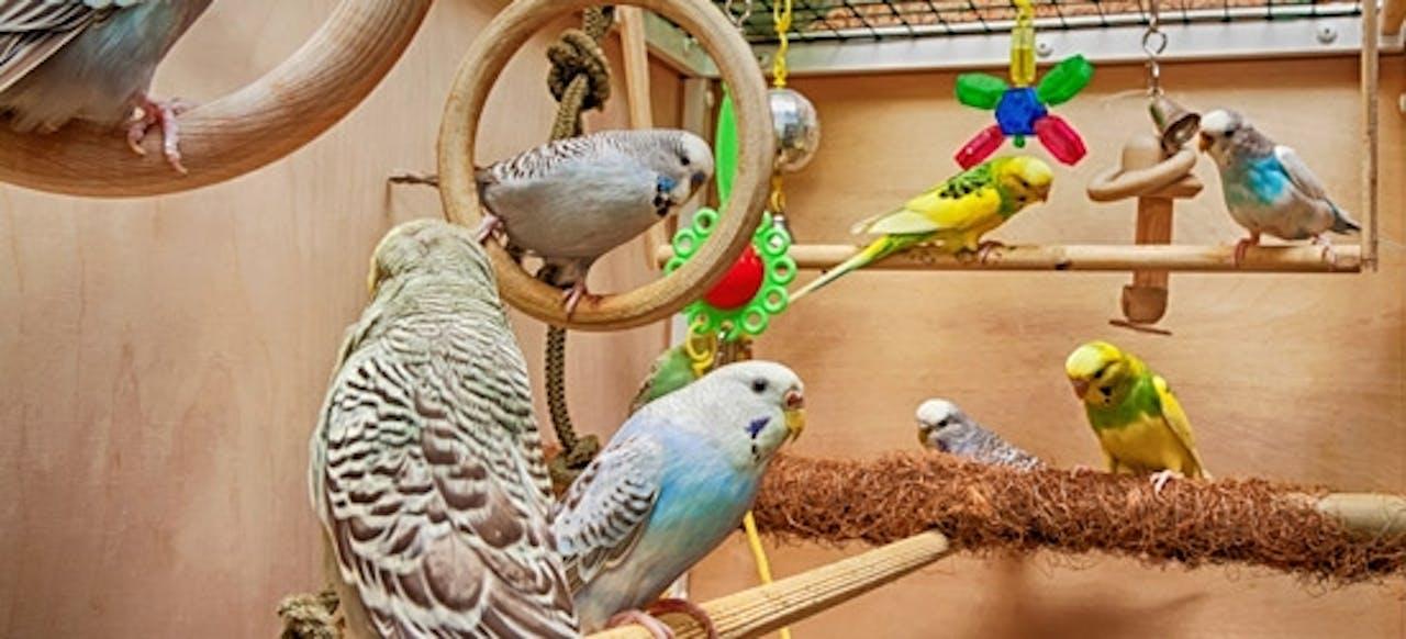 Sitzstangen für Ziervögel