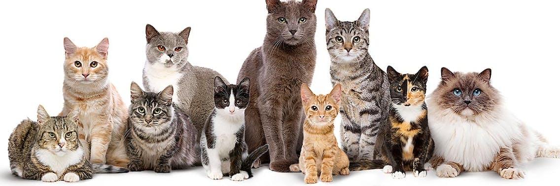 Fakten über Katzen