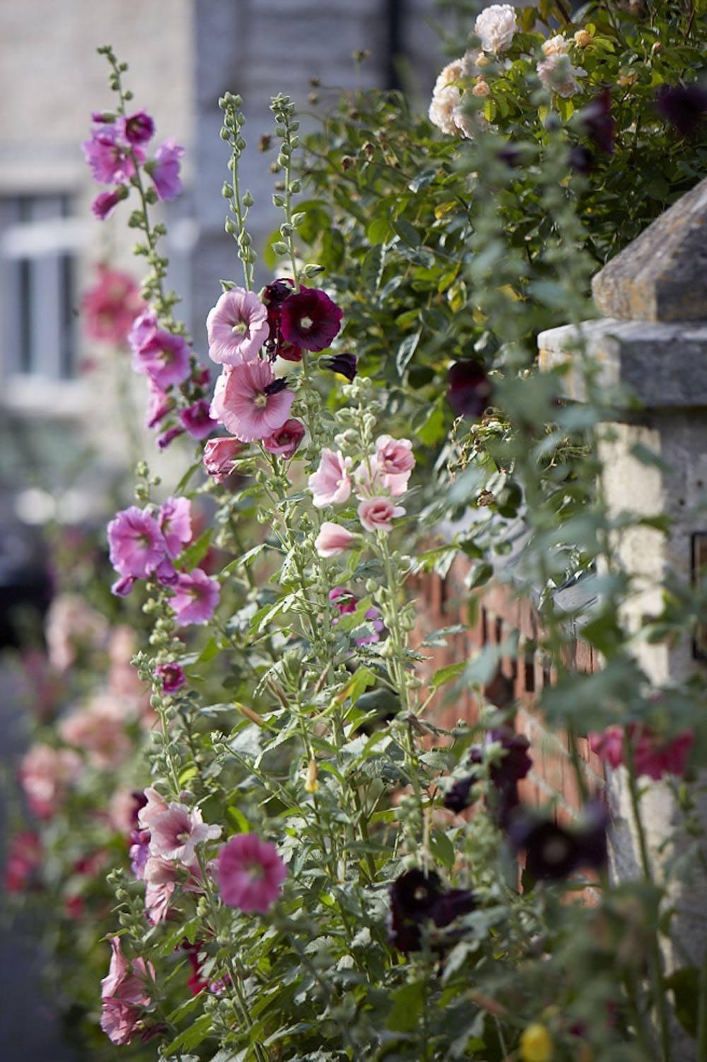 Frühlingsblumen in verschiedenen Pink- und Lilatönen.