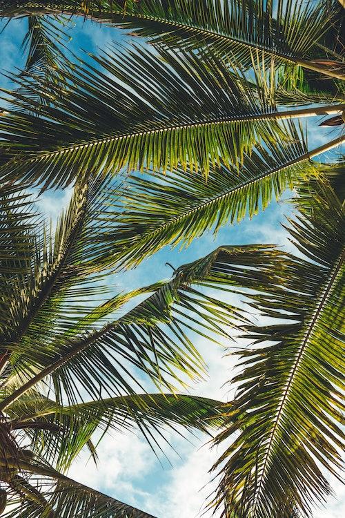 tropischer All-over-Look