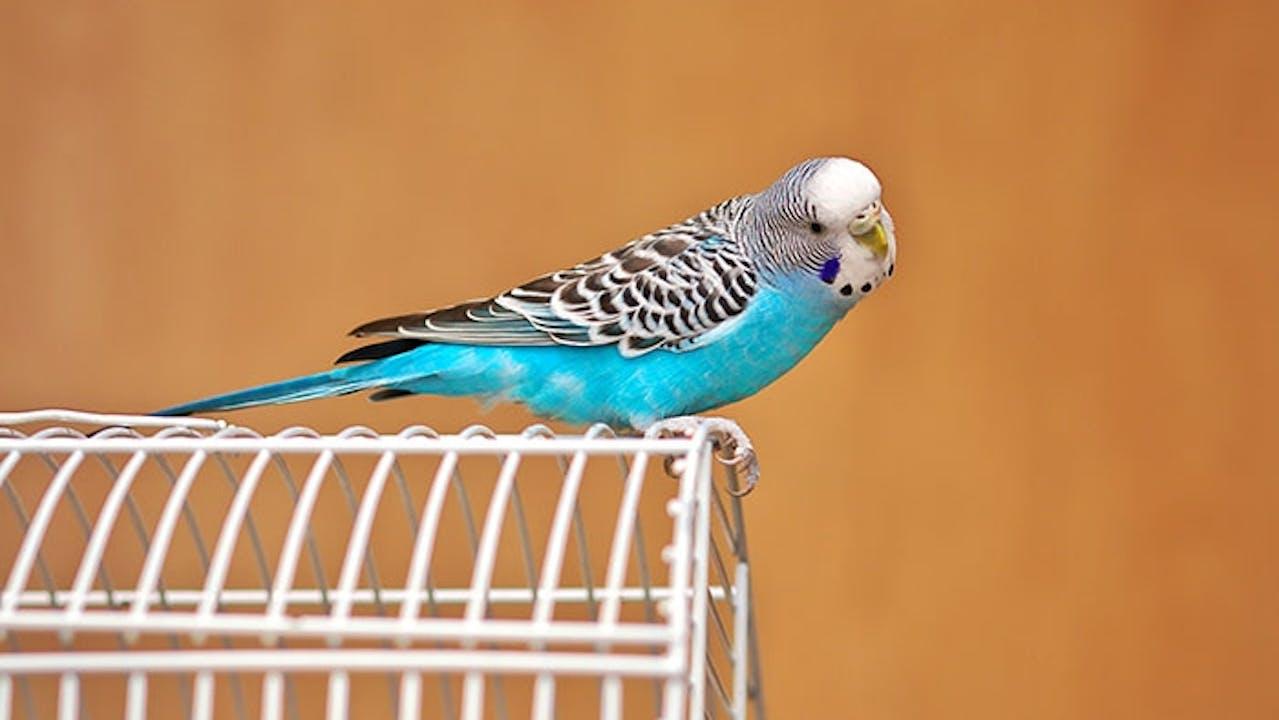 Erstausstattung für Ziervögel