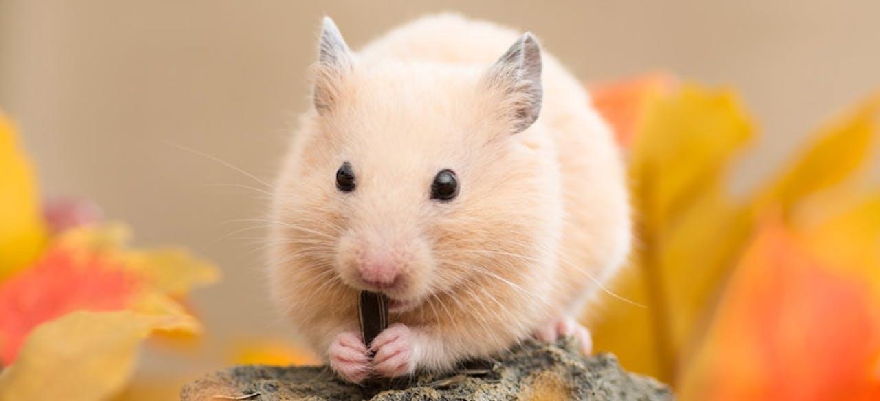 Richtige Beschäftigung für Hamster