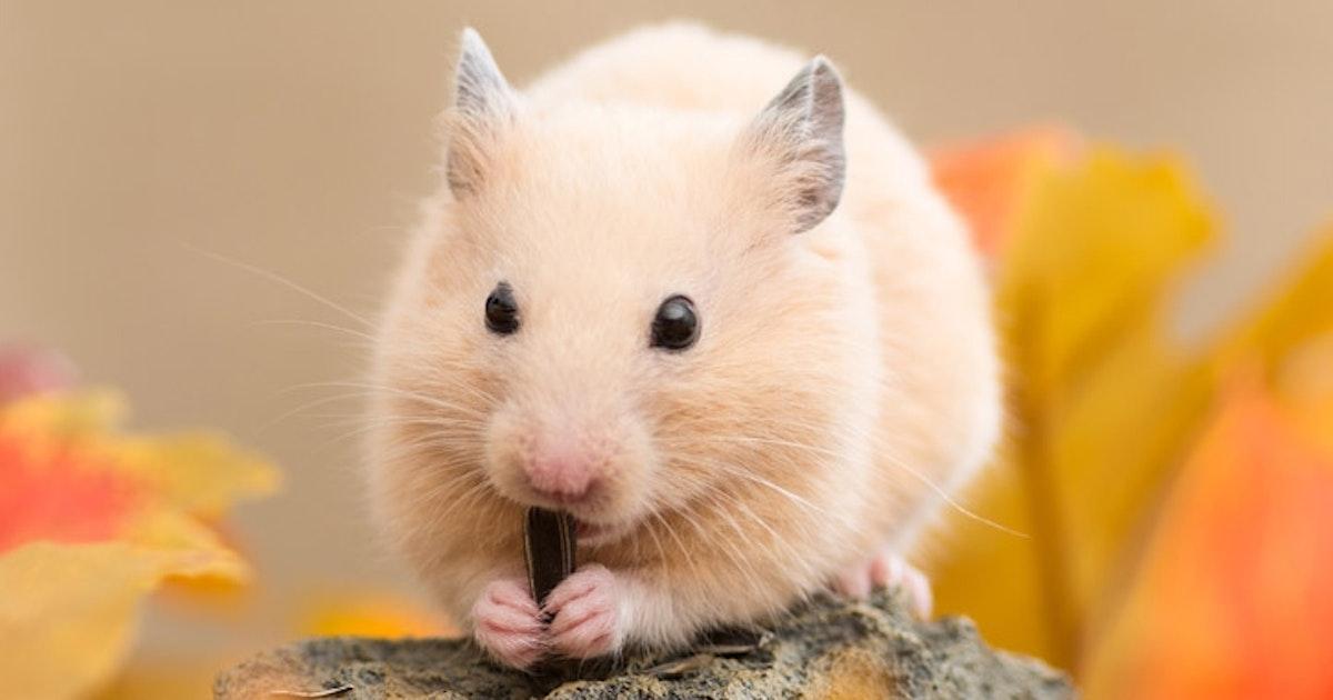 Die Richtige Beschaftigung Fur Hamster Das Futterhaus