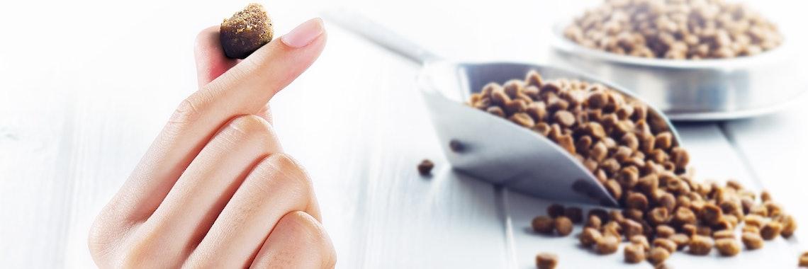 Inhaltsstoffe von Tierfutter: Hundefutter und Katzenfutter unter der Lupe
