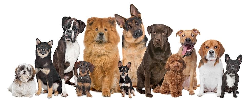 Gruppe verschiedener Hunde